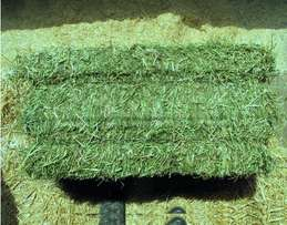 Fresh lucerne and alfalfa hay and other animal feed available