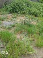 A plot of Land for Sale (size 100 ft x 50 ft )
