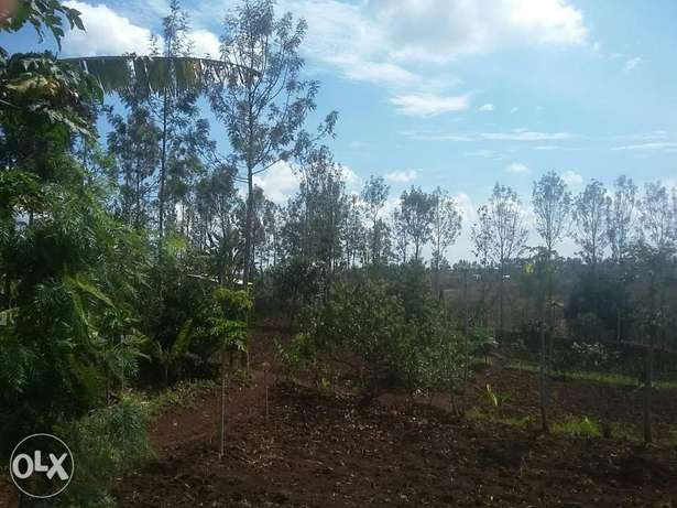 kenol plots 1/2 acre. 2km from the highway Thika - image 4