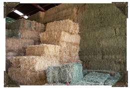 Hay(packed grass) for sale