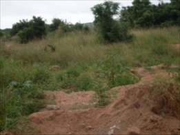 Lands for sale at kasoa. ...