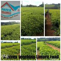 Land For Sale Along Limuru Road, 5 Acres With Ready To Harvest Tea!