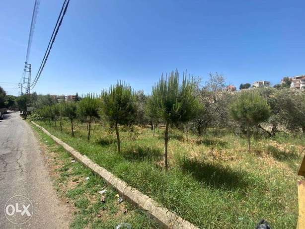 Land with olive grove to sale in Chouf Mghayriyeh 3000 sq