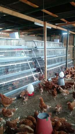 Homestead farm cages.high quality Baba Ndogo - image 3
