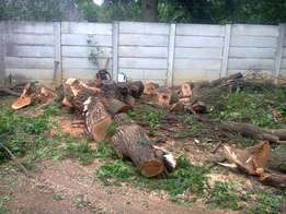 Tree felling,rubble removals/Gardening/furniture removals