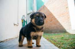 Puppies wanted small and large breed