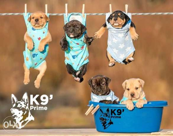 All Kinds of Puppies For Sale - جميع أنواع الحيوانات K9 Prime Breeding