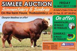 Simlee Auction 26 May 60 Simmentalers 35 Simbras