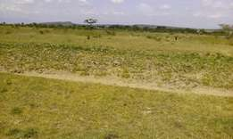 40 Acres land for sale in Kongasis
