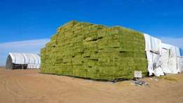 GRADE A Lucerne Hay bales For cattle