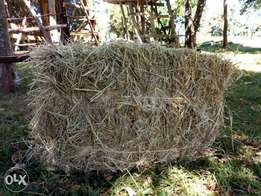 Looking for HAY? Call me.