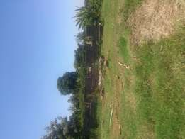 50by100 plot for sale