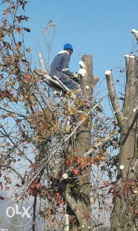 tree felling and rubbish removals Atlasville - image 1