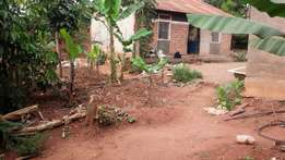 Commercial plot of 90ft by 30ft with title in Kiwanga at 50m