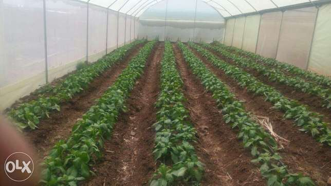 Greenhouses construction-Steel structured Ruai - image 5