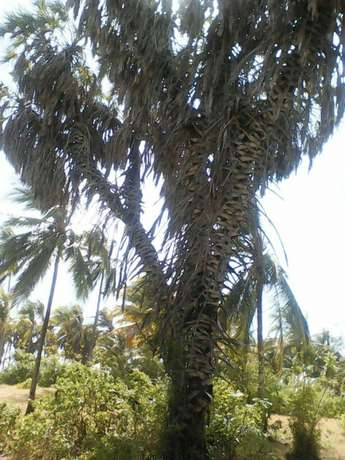 Land for sale Mombasa Island - image 1