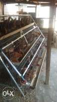 Hot-Dip galvanized Poultry Battery Cage