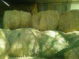 1.2m A Grade Eragrostis (240kg bales) available