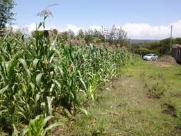 Several 1/8th acre vacant plots for sale in Mikinduri, Kiamunyi estate