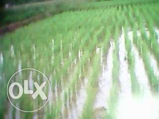 Agricultural land 1 acre in yimbo Siaya Town - image 1