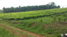 68 acres of Tea Estate for sale in Fort Portal