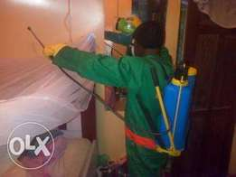 Bed bug fumigation and pest control