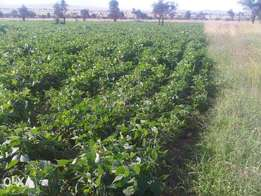 7.8 acres for sale near Konza City. Reduced price.