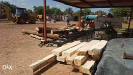 Wet off saw timber for sale