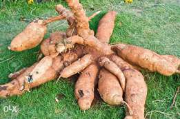 Cassava Stems & Tubers For Sale