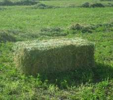 Lucerne Bales For Live Stock fine one