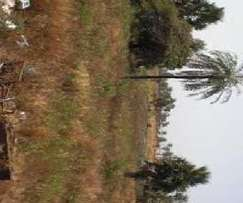 4300 Acres along Nanyuki Rumuruti Road Ksh. 190K/Acre