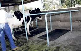 Cow Rubber Mattresses Soft