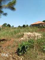 50x100ft plot of land for sale in Kira at 20m