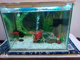 Gold fishes and tank with accessories
