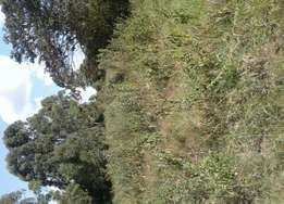1acre in westlands for sale