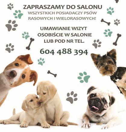 Salon Pielęgnacji Psów Chwila Dla Pupila Psi Fryzjer Groomer
