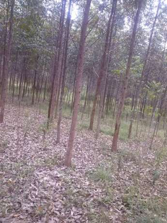 Land and trees for sale Mpigi - image 2