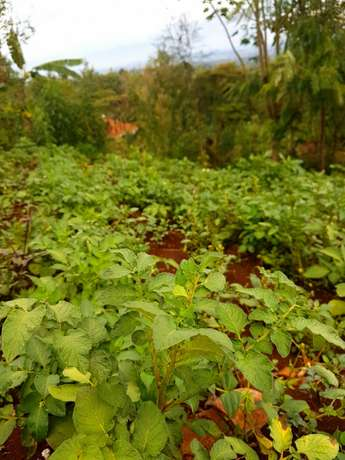 Red soil - 50 by 100 acre plot of Land in Upper Matasia Ngong Township - image 1