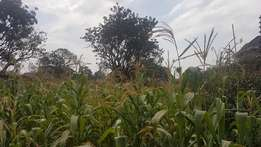 Runda Mumwe 0.5 acre Land for sale