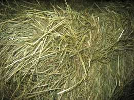 teff hay supplies