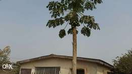 3Beroom fully detached Bungalow for sale at Adewole estate Ilorin