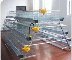 Layers cage for 500 chicken