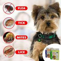 dog protection from insects