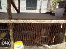 Double storey Chicken house for quick sale!!!