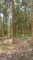 10 Acres of trees for sale