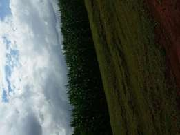 20 acres at soy with a valid title deed