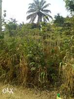 Acres of land in ikire