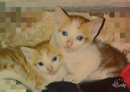 Beautiful kitten's