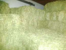 Pretty best quality Straw Hay/Lucerne/Alfafa Available Now for sale