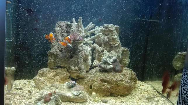 marine tank with breeding lair of clowns full setup Mitchell's Plain - image 3